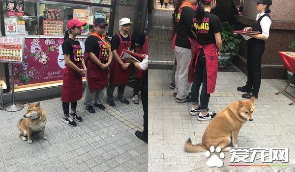 店长柴买鲁肉饭 不用考察人家开会啦!